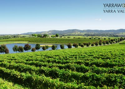 06_yarrawood_vineyard
