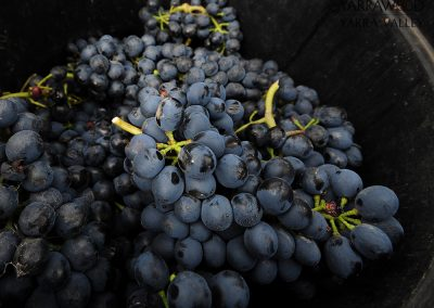 11_yarrawood_hand-picked-shiraz